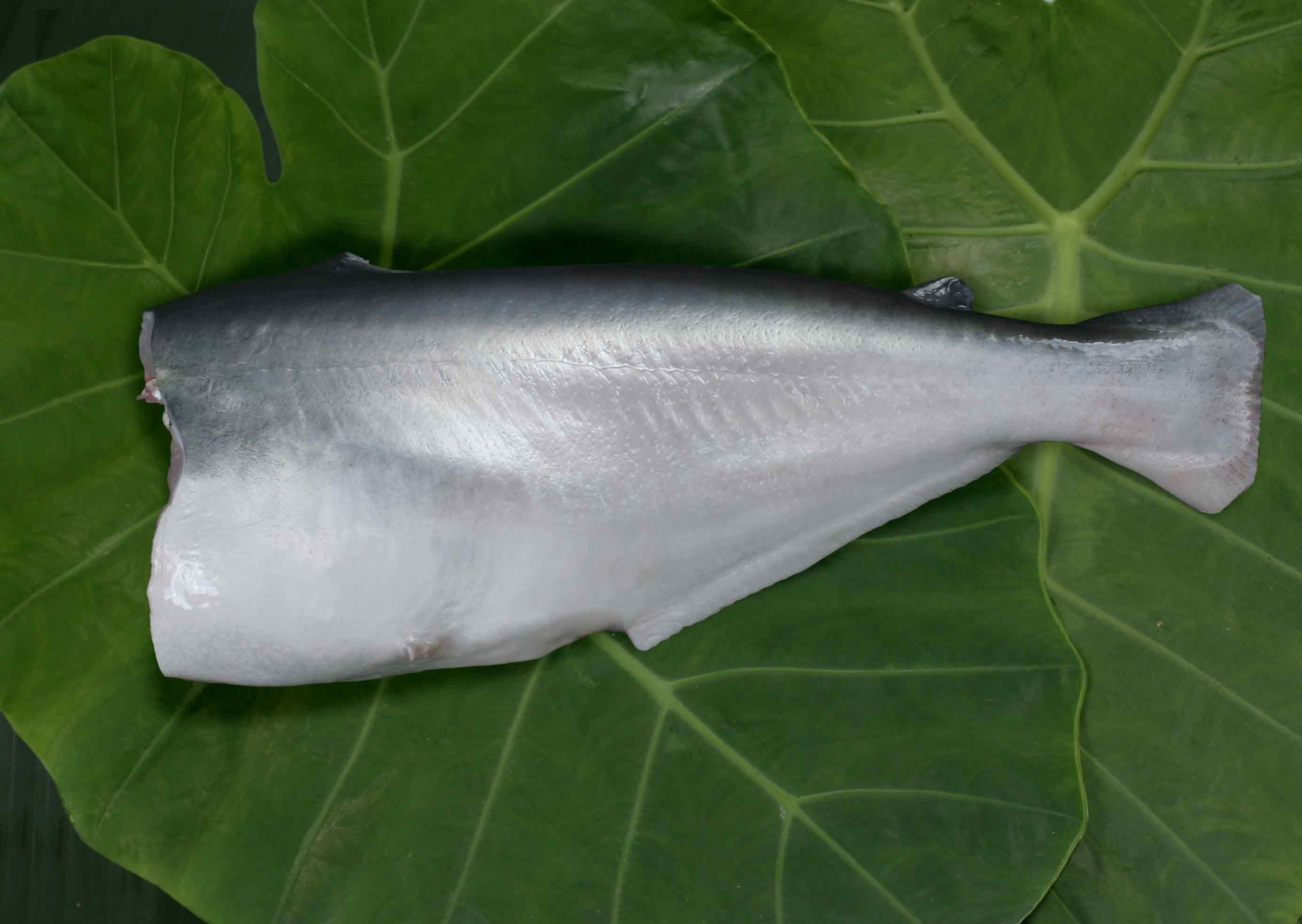pangasius whole round headless (2).jpg